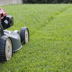 Onderhoud tuin en groenzone tuinaannemer rijckaert for Prijzen tuinonderhoud